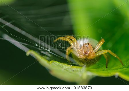 Front Portrait Of A Spider In A Web