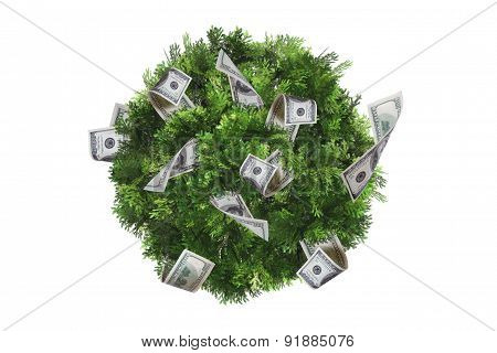 Top View Of Tree