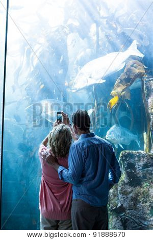 Wear view of a couple taking photo of fish at the aquarium