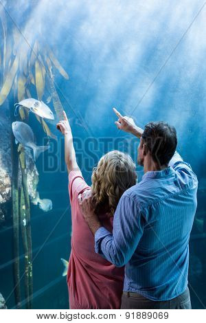 Wear view of couple pointing a fish in the tank at the aquarium