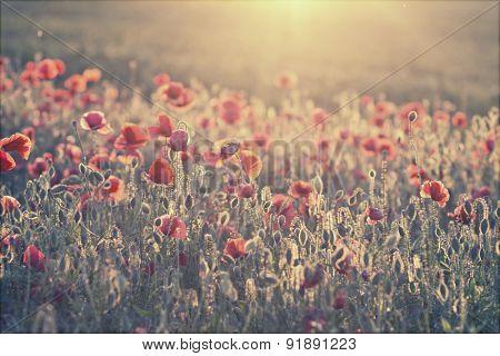 Poppy field - retro styled background