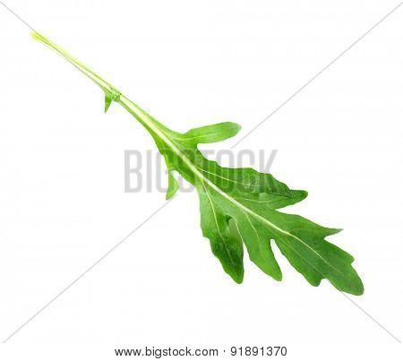 Green arugula leaf isolated on white