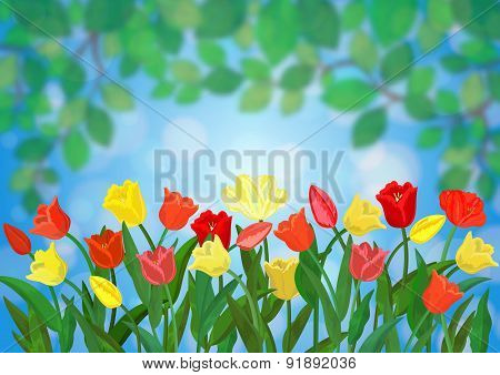 Colorful Tulips Border