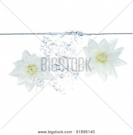 White Flowers and bubbles