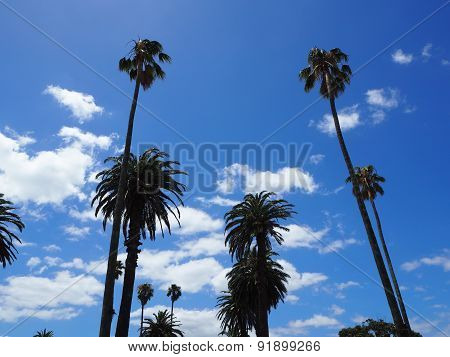 Palm trees in the summer sky