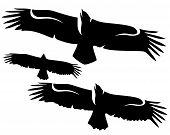 foto of spread wings  - flying eagle with spread wings  - JPG