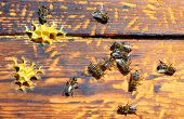 pic of honey bee hive  - bee hive with bees on it for your design - JPG