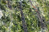 pic of gneiss  - Macro photography of the polished surface of a metamorphic serpentinite rock - JPG