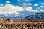 stock photo of aconcagua  - Volcano Aconcagua and Vineyard - JPG