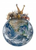 image of eland  - group of africa animal with planet earth Element of this image are furnished by NASA - JPG
