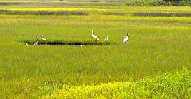 stock photo of marshlands  - Tropical birds in the wild on the marshland of Florida - JPG