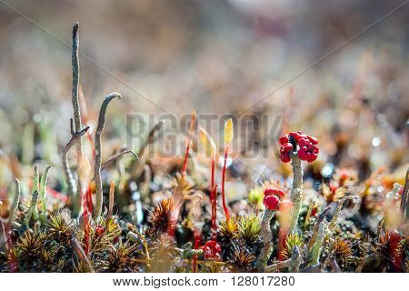 Macro photography with various mosses selective focus