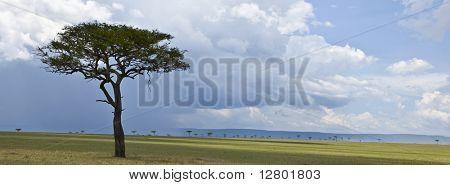 Africa landscape, Serengeti National Park, Serengeti, Tanzania