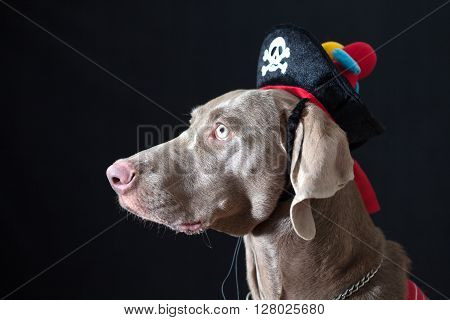 Canine pirate wearing a hat with a parrot