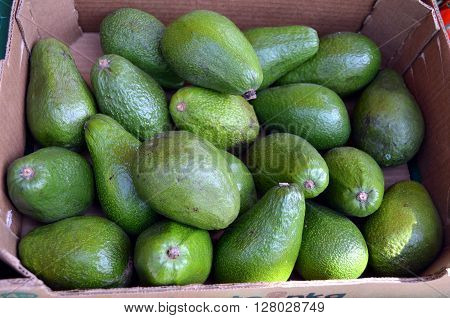 Bunch of fresh and natural green avocado at a farmers market