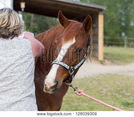 older Arabian  brown and white mature horse in pasture being cared for by woman