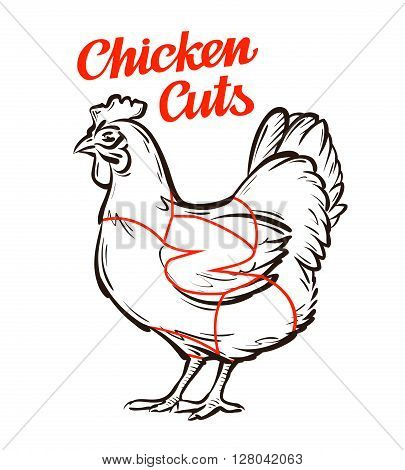 vector chicken, hen chart. meat cuts or butcher shop