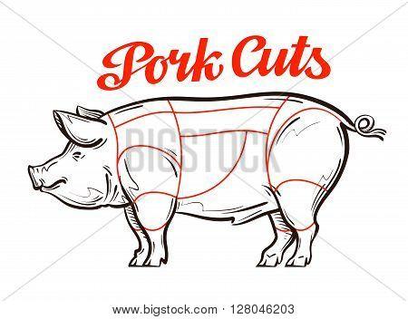 vector pork, pig chart. meat cuts or butcher shop