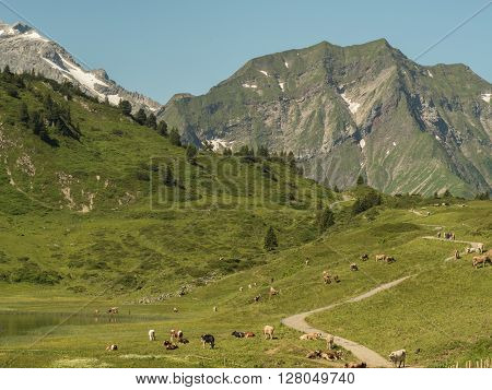 A view of Alpine mountains surrounding the village Schocken in Bregenzerwald region Vorarlberg Austria