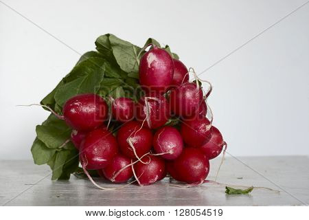 bunch of fresh radish on a neutral background
