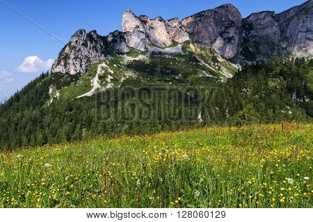 Mountain alpine meadow with wildflowers in the Rofan mountains. Austria Tirol.