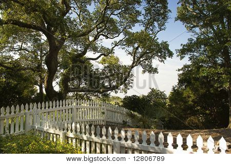 White picket fence with live oak tree on Bald Head Island, North Carolina.