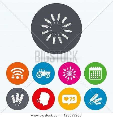 Wifi, like counter and calendar icons. Agricultural icons. Wheat corn or Gluten free signs symbols. Tractor machinery. Human talk, go to web.