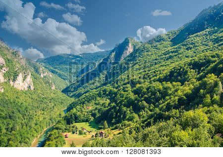 Mountain river Tara and forest in Montenegro.
