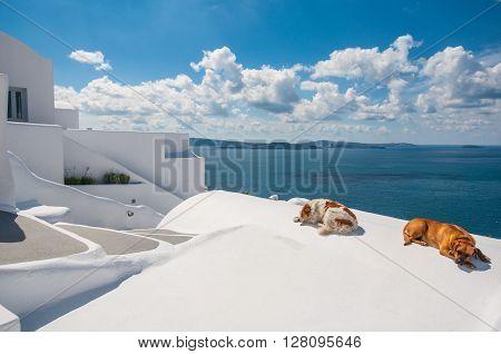 Sleeping dogs in Santorini island, Oia, Greece