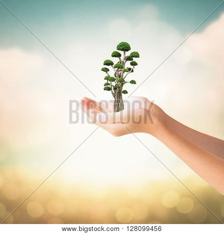 Hands Of Little Girl Holding Bonsai Tree