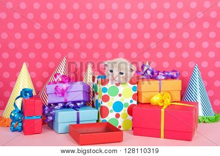 Kitten In Present Box With Birthday Party Presents And Hats