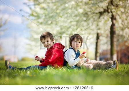 Two cute little children boy brothers eating strawberry in the park on a spring sunny afternoon together with their big teddy bear