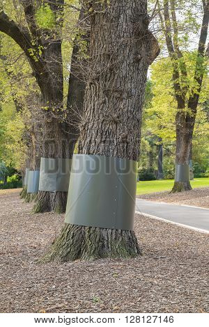 Guards around trunks to restrict access of small animals to tree canopy