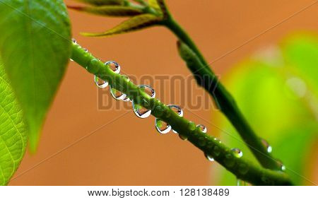close up of waterdrops on a plant