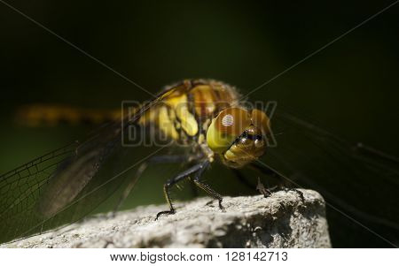 a dragon fly is taking a rest
