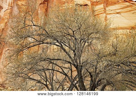 detail of leafless tree in front of a sandstone wall