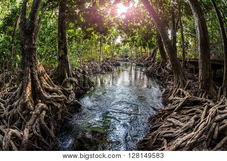 Trees at the stream of the river