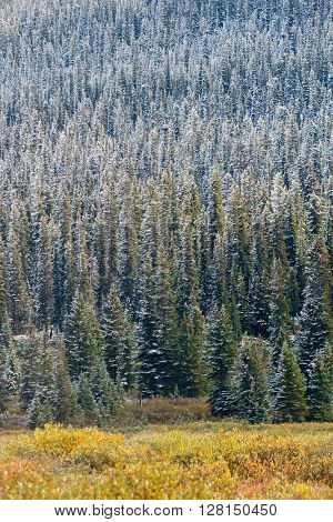 Snow trees in Banff National Park