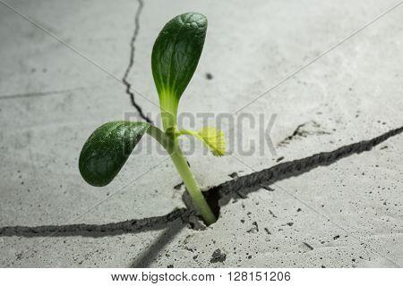 New growing life