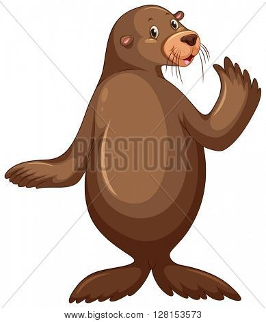 Sea lion with brown skin illustration