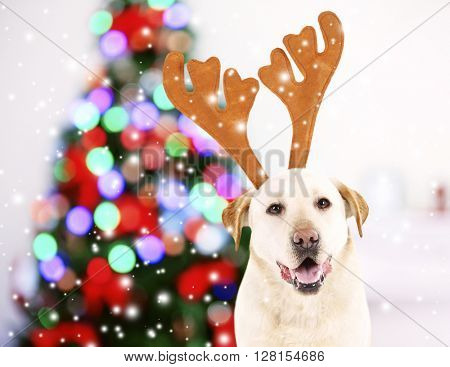 Funny dog with antlers near Christmas tree
