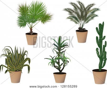 plants in pots collection isolated on white background