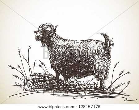 Sketch of black goat standing among tall grass. Hand drawn illustration. Isolated