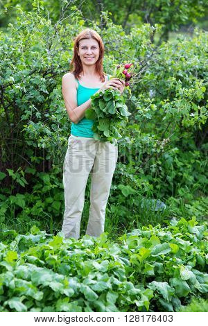 work in the garden. young woman collects radish harvest