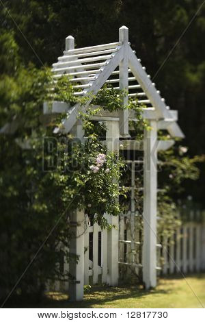 Arbor with rose bush and white picket fence on Bald Head Island, North Carolina.
