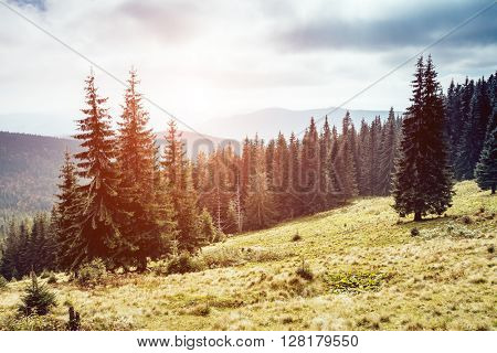 View of the magic valley which glowing by sunlight. Dramatic scene and picturesque picture. Location place Carpathian, Ukraine, Europe. Beauty world. Retro and vintage style. Instagram toning effect