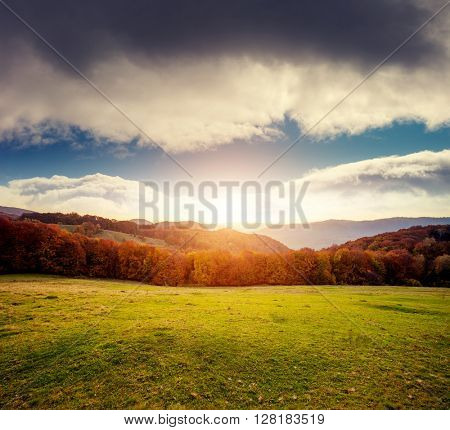 Fantastic view of the magic field glowing by sunlight. Dramatic picture and picturesque scene. Location place Carpathian national park, Ukraine, Europe. Beauty world. Warm toning effect. Soft filter.
