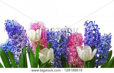 Composition of hyacinth and tulips isolated on white