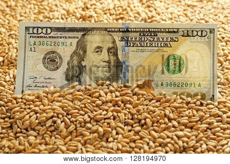 Dollar banknote and wheat grains. Agricultural income concept