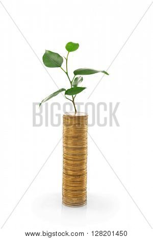 Stack of coins with young plant isolated on white
